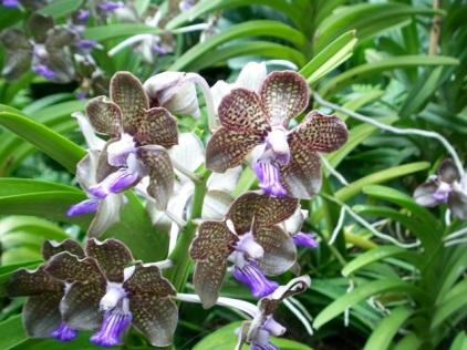 Orchid Garden-10