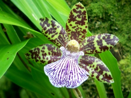 Orchid Garden-12