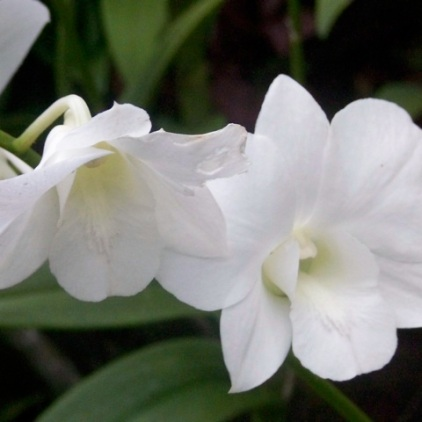 Orchid Garden-13