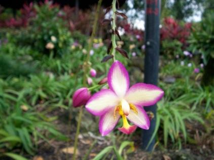 Orchid Garden-14