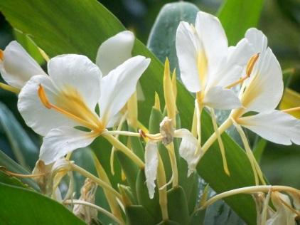 Orchid Garden-5