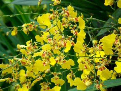 Orchid Garden-7