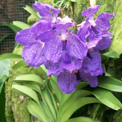 Orchid Garden-9