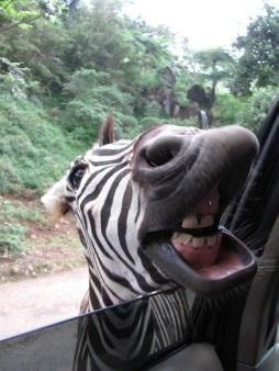 Taman Safari