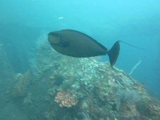 Diving at Tulamben
