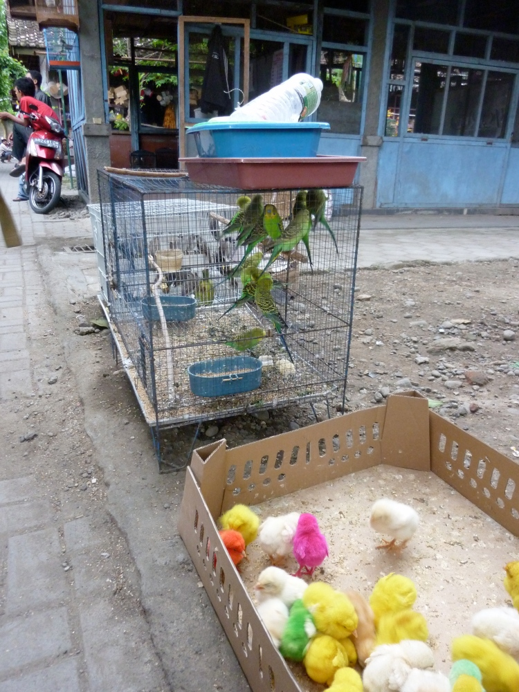 Yogyakarta – Can I do yoga there? (2/5)