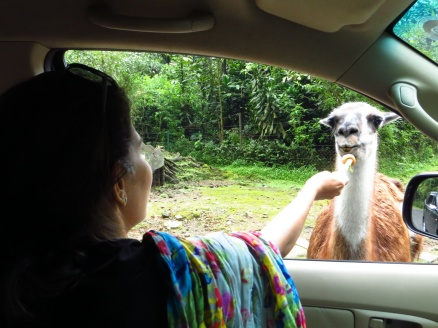 Oooh, Taman Safari