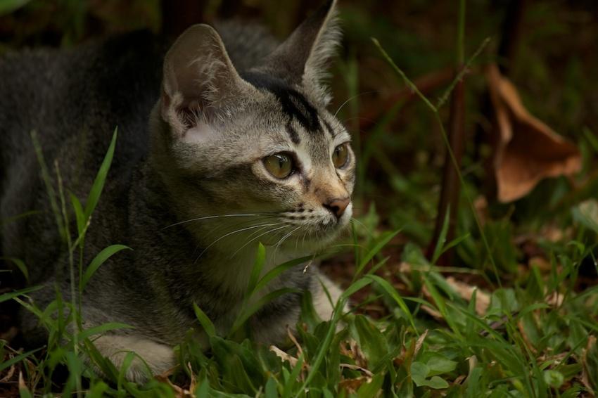 Mia in the jungle