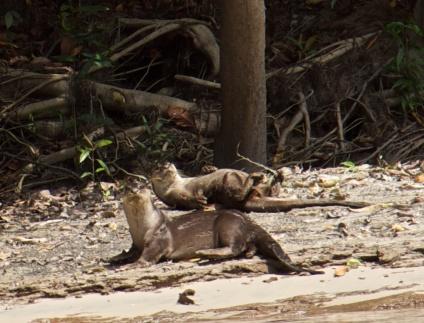 Wildlife spotting