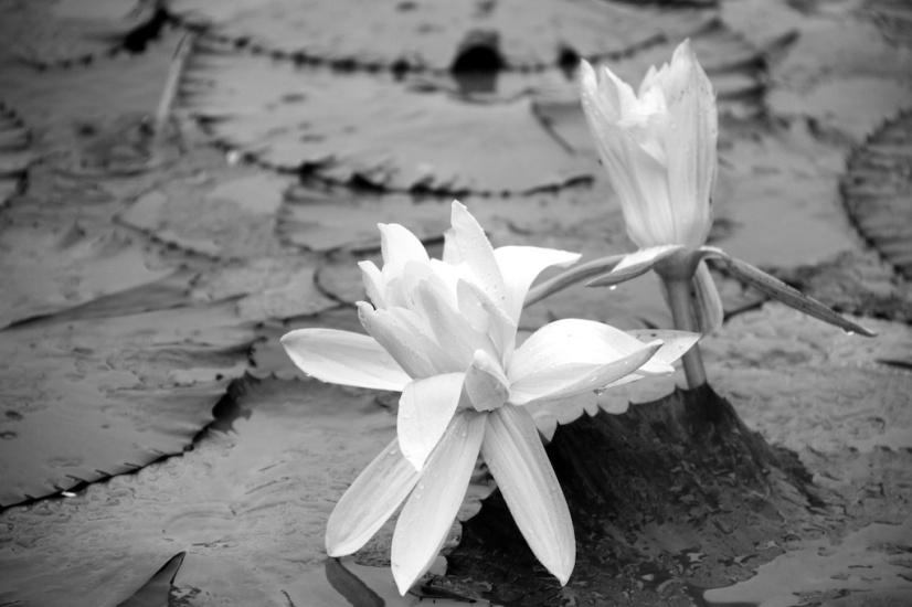Photo walk Lembang Pond