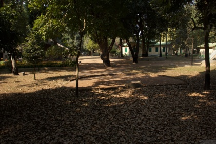 Classroom under a tree