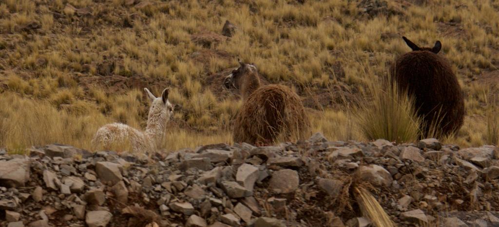 Juliaca to Arequipa