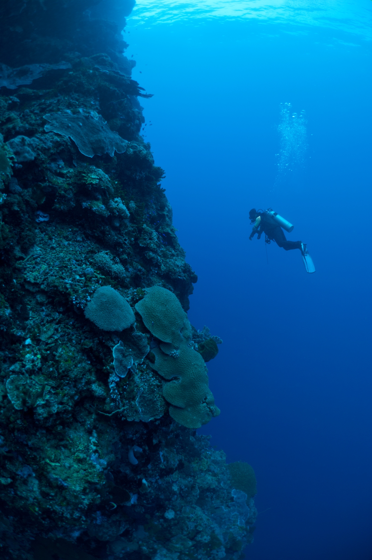 Diver on the steep reef wall of Manado Tua, Bunaken Marine Park, Manado, Sulawesi, Indonesia.