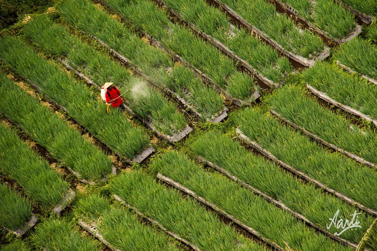 Bawang Merah-1.jpg