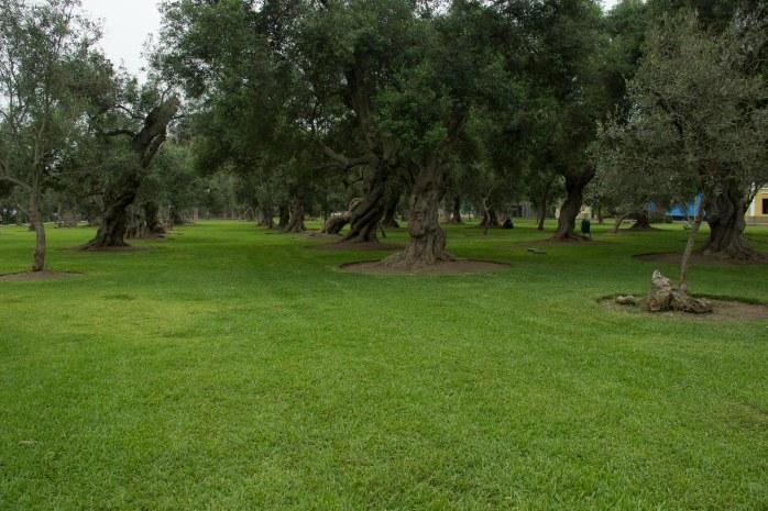 Bosque el Olivar B-19