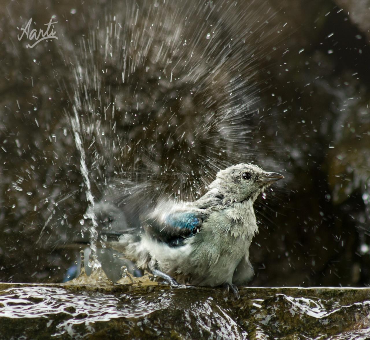 Bird bath-1