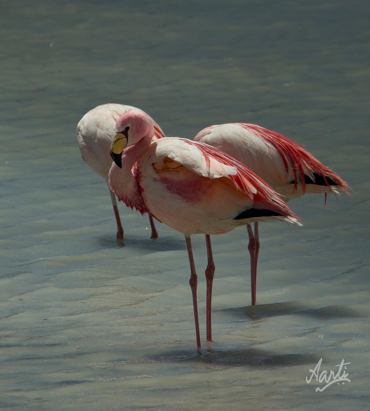 flamingo-1-2