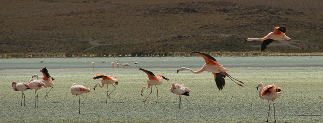 The Flamboyance of Flamingos