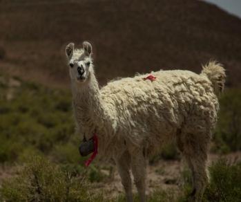 Bolivia countryside-2