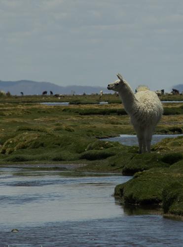 Bolivia countryside-8