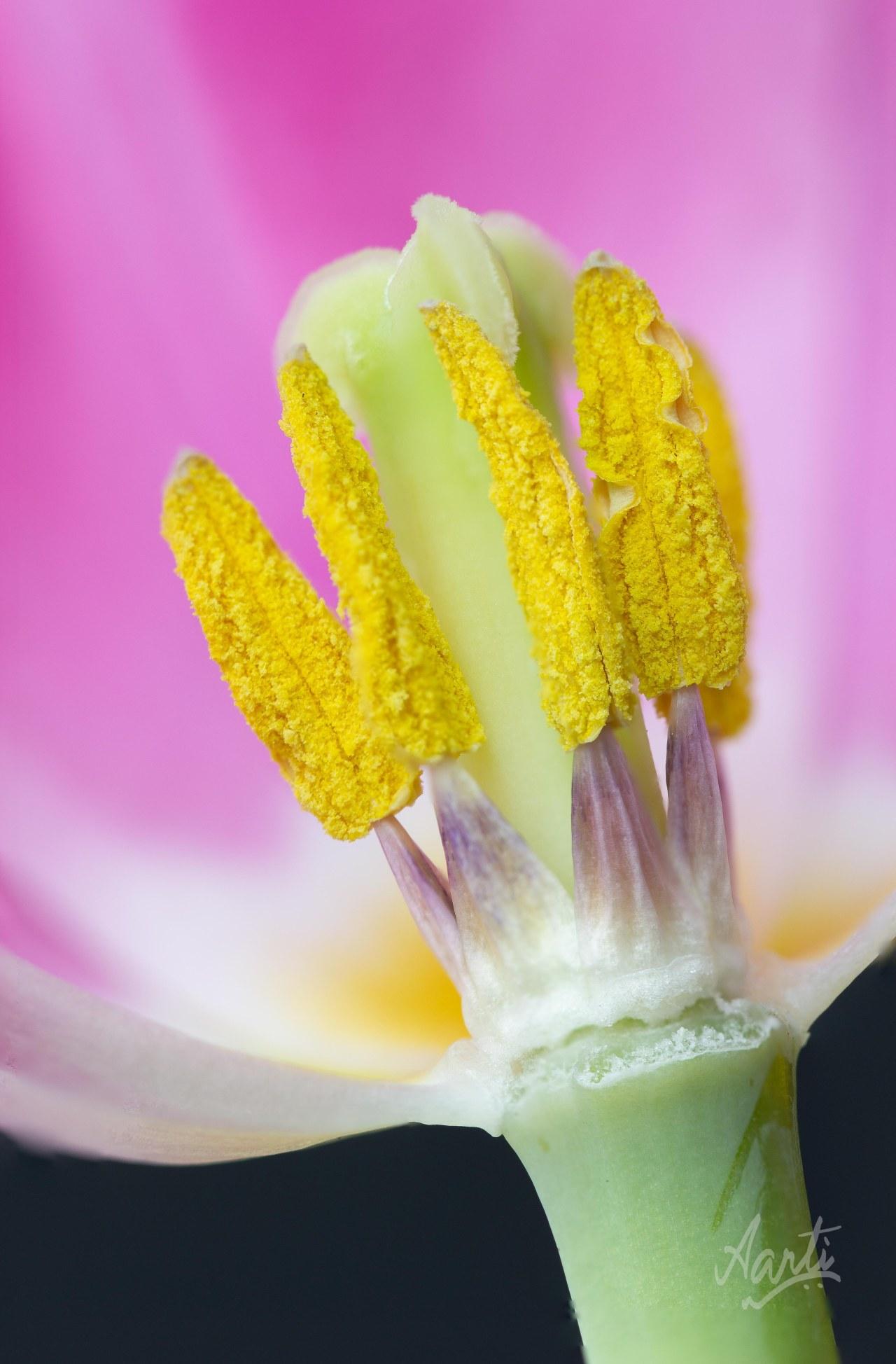 Pollen Popsicles